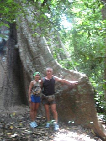 Vic-Tours: albero elefante