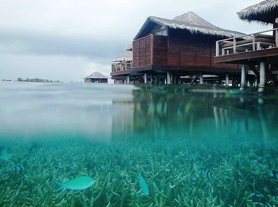 Anantara VeliMaldivesResort: Life coral under water villas