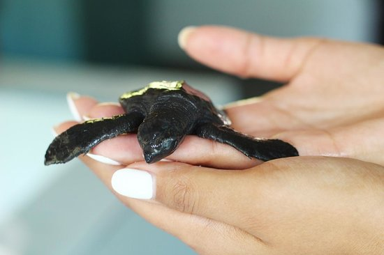 Turtle Conservation and Education Centre : My adopted turtle, I named him Mr.toto!
