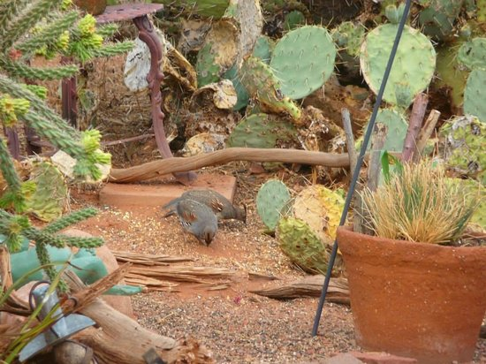 Cozy Cactus Bed and Breakfast : birds in the backyard