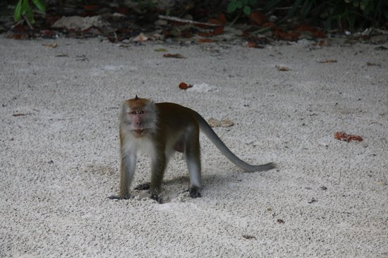 The Datai Langkawi: Greeted by Monkeys ...