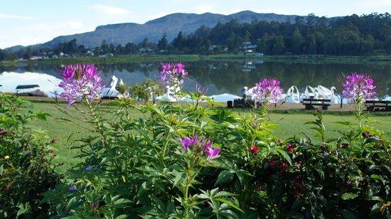Lady Horton Bungalow: озеро во всей красе