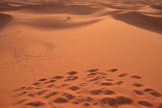 Merzouga Dunes: サハラ砂丘