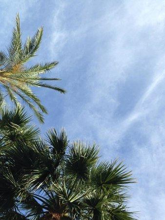 Vincci Hotel Envia Almeria Wellness & Golf: Palmeras en la piscina