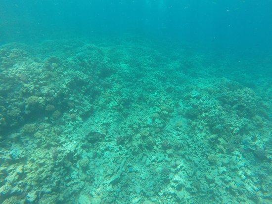 Sheraton Soma Bay Resort: Sheraton Soma Bay Coral Reef .. Amazing