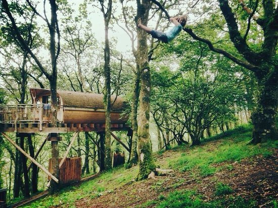 The rope swing at 39 penny 39 picture of living room for 8 living room tree houses powys
