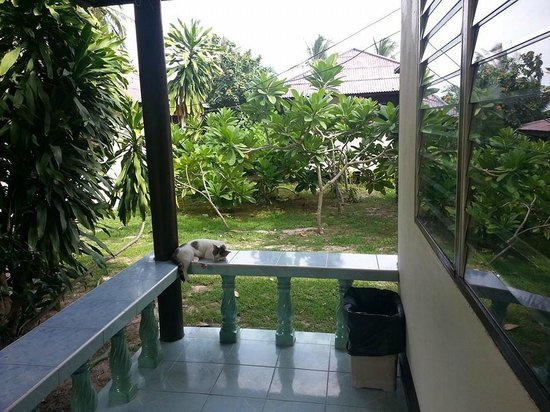 Crystal Dive Resort: Fanroom bungalow patio. Cats go where they want on Koh Tao.