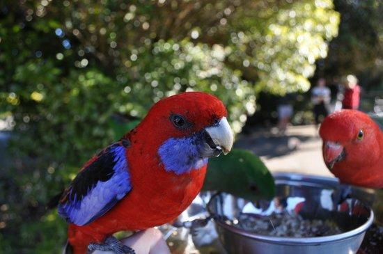 Southern Cross 4WD Tours: Bird Feeding at Lamington National Park