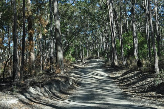 Southern Cross 4WD Tours: Mount Tamborine 4WD track