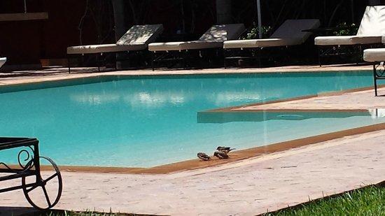 El Miria Palais Riad : Une piscine sans chlore