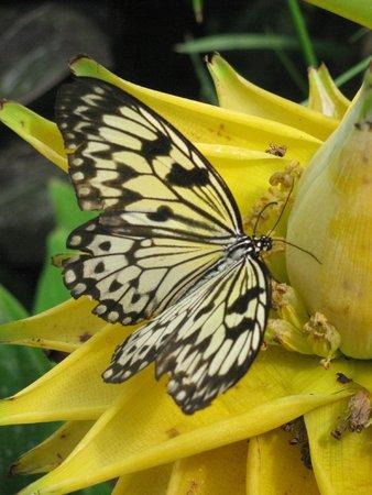 Le Tropique du Papillon
