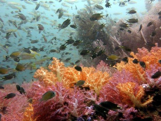 No Gravity Dive Center: Dive near Phi-Phi Island