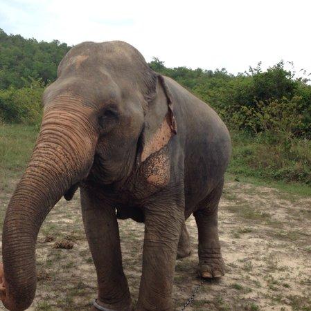 Hutsadin Elephant Foundation: Just taking an elephant for a walk