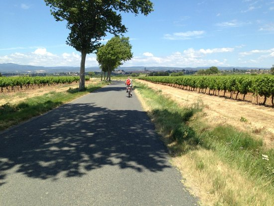 Cycling from Chateau de Siran