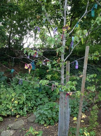 McDougall Cottage : Garden