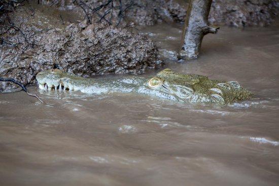 Palo Verde Boat Tours: baby croc