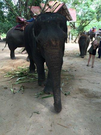 Centara Grand Mirage Beach Resort Pattaya: elephant village