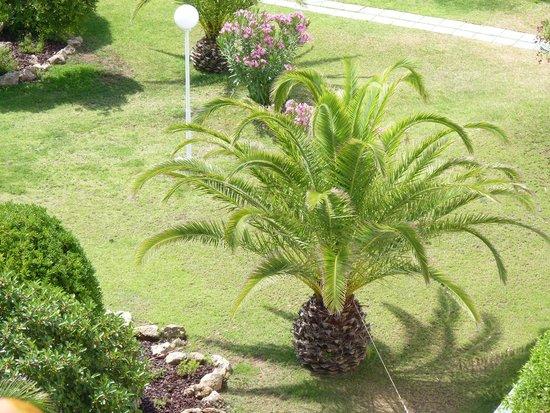 Vasco da Gama Hotel: Hotel gardens