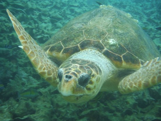 Grumpy & Happy : lovely loggerhead saying welcome to Belize