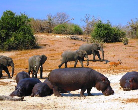 Chobe Game Lodge : Unpredictable Wild Life in Chobe