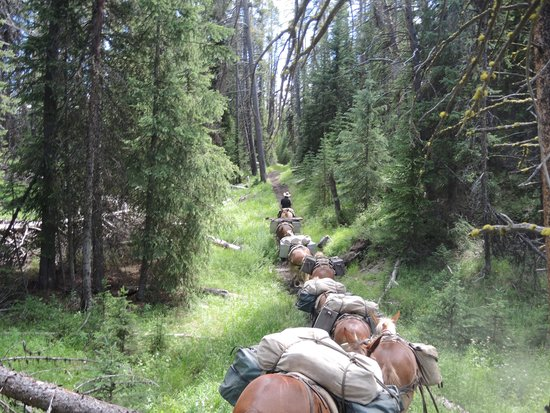Yellowstone Wilderness Outfitters: Deeper into the forest