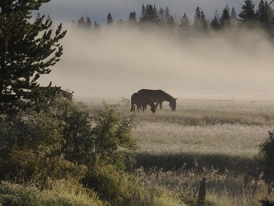 Yellowstone Wilderness Outfitters: Horses in the mist