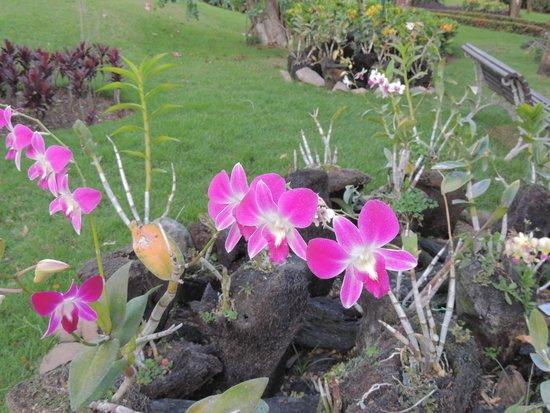 Iberostar Hacienda Dominicus: orquideas en el parque