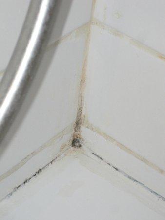 Crowne Plaza Hotel Jerusalem: Bathroom Mold