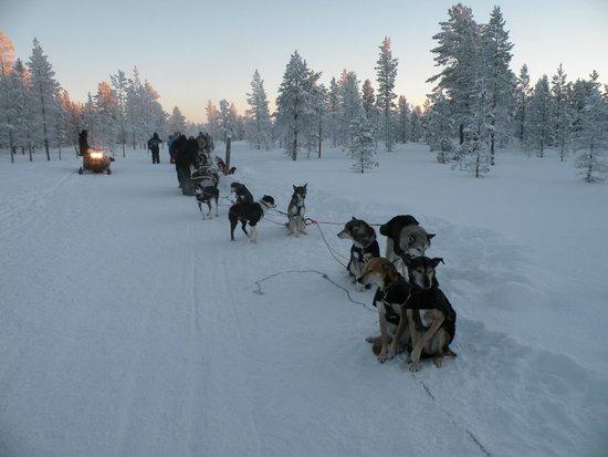 Lapland Hotel Hetta: sortie traîneaux