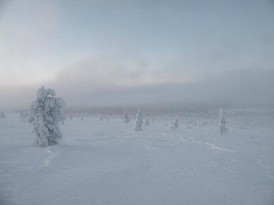 Lapland Hotel Hetta: Le parc national