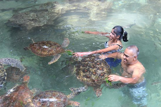DoubleTree by Hilton Resort Zanzibar - Nungwi : Swimming with turles