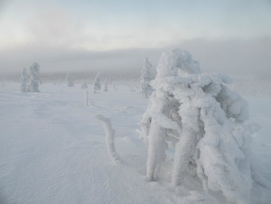 Lapland Hotel Hetta: Parc national en janvier