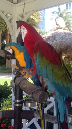 The Palms Hotel & Spa: hotel parrots