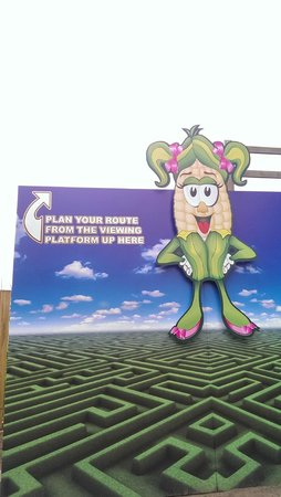 York Maze: Sweetie next to the raised viewing platform at the maze