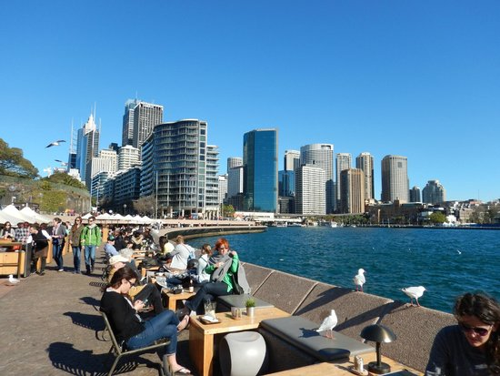 Sydney Harbour : view of harbor from opera house
