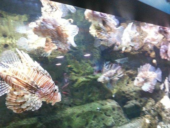 Duplicate picture of georgia aquarium atlanta for Georgia freshwater fish