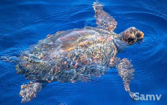 Affretement Maritime Villefranchois : Turtle