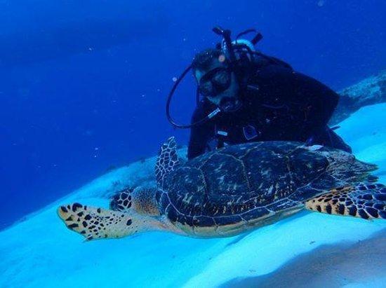 Plongee Grand Cozumel Diving: J'aime les tortues!