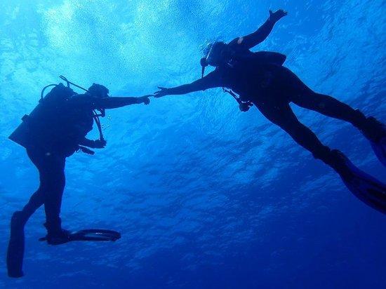 j aime les tortues picture of plongee grand cozumel diving cozumel tripadvisor