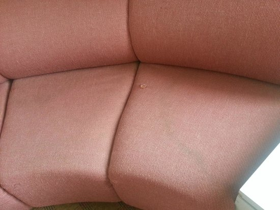 Clarion Hotel Midway Airport: stains on the couch