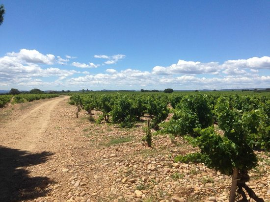 Provence and Wine : Chateauneuf du Pape 1