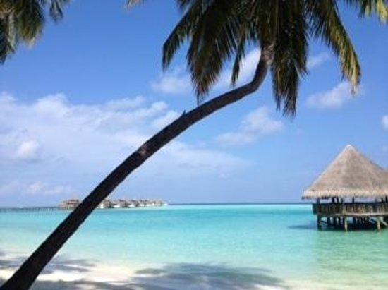 Gili Lankanfushi Maldives : desayuno en el paraiso