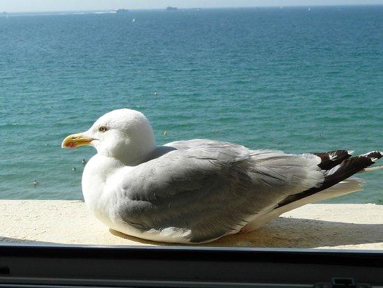 Kyriad Saint Malo Centre - Plage : Visite sur le bord de la fenêtre