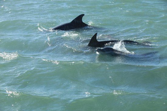 South Padre Island Dolphin Research & Sea Life Nature Center: Dolphins