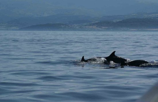 Naxos Diving: Dolphins on our way!