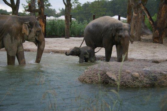 Zoo Zurich: Ultimo nato
