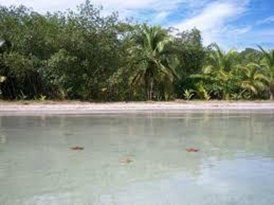 Hotel Tierra Verde: AMAZING Starsfish beach