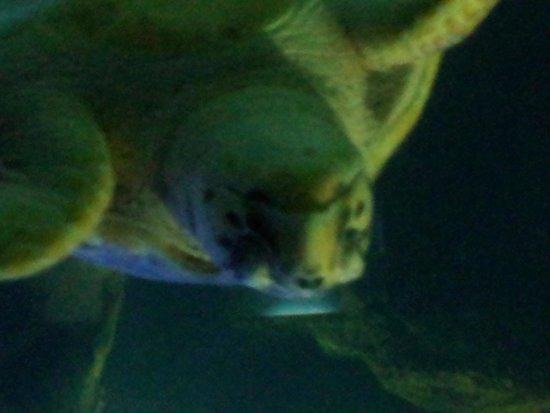 Lanzarote Aquarium : turtle