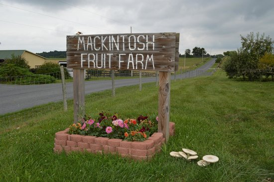 Berryville, Вирджиния: Mackintosh Fruit Farm