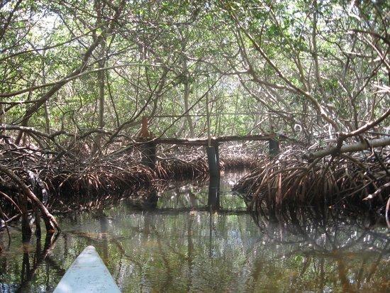 Tours en Islas del Rosario: Los manglares
